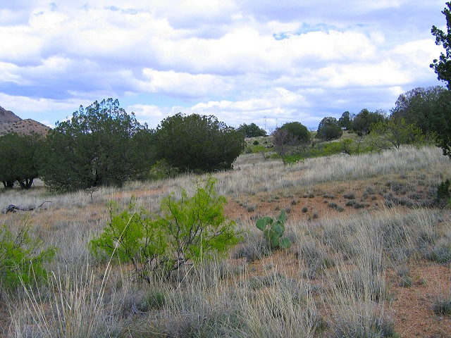 Looking east along the south fence boundary; May, 2005